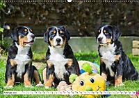 Schweizer Sennenhunde - die Hunde aus den Schweizer Alpen (Wandkalender 2019 DIN A2 quer) - Produktdetailbild 2