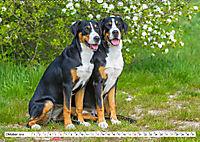 Schweizer Sennenhunde - die Hunde aus den Schweizer Alpen (Wandkalender 2019 DIN A2 quer) - Produktdetailbild 10