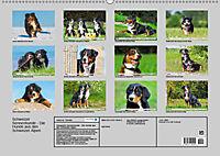 Schweizer Sennenhunde - die Hunde aus den Schweizer Alpen (Wandkalender 2019 DIN A2 quer) - Produktdetailbild 13