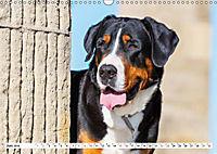 Schweizer Sennenhunde - die Hunde aus den Schweizer Alpen (Wandkalender 2019 DIN A3 quer) - Produktdetailbild 6