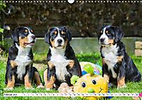 Schweizer Sennenhunde - die Hunde aus den Schweizer Alpen (Wandkalender 2019 DIN A3 quer) - Produktdetailbild 2