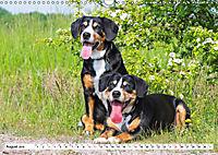 Schweizer Sennenhunde - die Hunde aus den Schweizer Alpen (Wandkalender 2019 DIN A3 quer) - Produktdetailbild 8