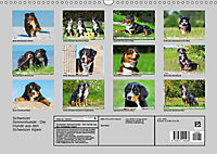 Schweizer Sennenhunde - die Hunde aus den Schweizer Alpen (Wandkalender 2019 DIN A3 quer) - Produktdetailbild 13