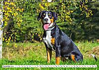 Schweizer Sennenhunde - die Hunde aus den Schweizer Alpen (Wandkalender 2019 DIN A3 quer) - Produktdetailbild 12