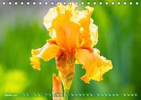 Schwertlilien - Eyecatcher in Parks und Gärten (Tischkalender 2019 DIN A5 quer) - Produktdetailbild 10