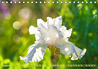 Schwertlilien - Eyecatcher in Parks und Gärten (Tischkalender 2019 DIN A5 quer) - Produktdetailbild 1