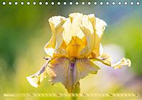 Schwertlilien - Eyecatcher in Parks und Gärten (Tischkalender 2019 DIN A5 quer) - Produktdetailbild 3