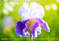 Schwertlilien - Eyecatcher in Parks und Gärten (Tischkalender 2019 DIN A5 quer) - Produktdetailbild 2