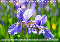 Schwertlilien - Eyecatcher in Parks und Gärten (Tischkalender 2019 DIN A5 quer) - Produktdetailbild 4