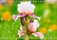 Schwertlilien - Eyecatcher in Parks und Gärten (Tischkalender 2019 DIN A5 quer) - Produktdetailbild 5