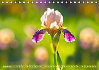 Schwertlilien - Eyecatcher in Parks und Gärten (Tischkalender 2019 DIN A5 quer) - Produktdetailbild 8