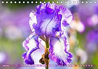 Schwertlilien - Eyecatcher in Parks und Gärten (Tischkalender 2019 DIN A5 quer) - Produktdetailbild 6