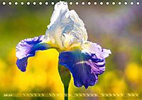 Schwertlilien - Eyecatcher in Parks und Gärten (Tischkalender 2019 DIN A5 quer) - Produktdetailbild 7