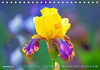 Schwertlilien - Eyecatcher in Parks und Gärten (Tischkalender 2019 DIN A5 quer) - Produktdetailbild 11