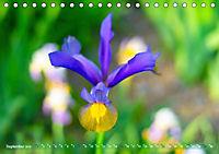 Schwertlilien - Eyecatcher in Parks und Gärten (Tischkalender 2019 DIN A5 quer) - Produktdetailbild 9
