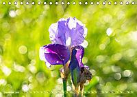 Schwertlilien - Eyecatcher in Parks und Gärten (Tischkalender 2019 DIN A5 quer) - Produktdetailbild 12