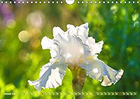 Schwertlilien - Eyecatcher in Parks und Gärten (Wandkalender 2019 DIN A4 quer) - Produktdetailbild 1