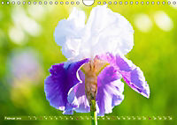 Schwertlilien - Eyecatcher in Parks und Gärten (Wandkalender 2019 DIN A4 quer) - Produktdetailbild 2