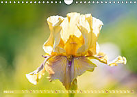 Schwertlilien - Eyecatcher in Parks und Gärten (Wandkalender 2019 DIN A4 quer) - Produktdetailbild 3
