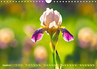 Schwertlilien - Eyecatcher in Parks und Gärten (Wandkalender 2019 DIN A4 quer) - Produktdetailbild 8