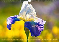 Schwertlilien - Eyecatcher in Parks und Gärten (Wandkalender 2019 DIN A4 quer) - Produktdetailbild 7
