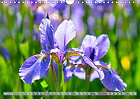 Schwertlilien - Eyecatcher in Parks und Gärten (Wandkalender 2019 DIN A4 quer) - Produktdetailbild 4