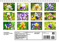 Schwertlilien - Eyecatcher in Parks und Gärten (Wandkalender 2019 DIN A4 quer) - Produktdetailbild 13
