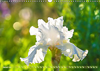 Schwertlilien - Eyecatcher in Parks und Gärten (Wandkalender 2019 DIN A3 quer) - Produktdetailbild 1