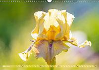 Schwertlilien - Eyecatcher in Parks und Gärten (Wandkalender 2019 DIN A3 quer) - Produktdetailbild 3