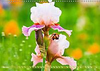 Schwertlilien - Eyecatcher in Parks und Gärten (Wandkalender 2019 DIN A3 quer) - Produktdetailbild 5