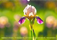 Schwertlilien - Eyecatcher in Parks und Gärten (Wandkalender 2019 DIN A3 quer) - Produktdetailbild 8