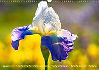 Schwertlilien - Eyecatcher in Parks und Gärten (Wandkalender 2019 DIN A3 quer) - Produktdetailbild 7