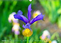 Schwertlilien - Eyecatcher in Parks und Gärten (Wandkalender 2019 DIN A3 quer) - Produktdetailbild 9
