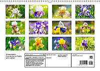 Schwertlilien - Eyecatcher in Parks und Gärten (Wandkalender 2019 DIN A3 quer) - Produktdetailbild 13