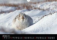 Scotland's Wildlife 2019 (Wall Calendar 2019 DIN A4 Landscape) - Produktdetailbild 1