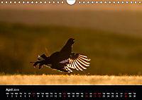Scotland's Wildlife 2019 (Wall Calendar 2019 DIN A4 Landscape) - Produktdetailbild 4