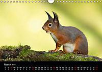 Scotland's Wildlife 2019 (Wall Calendar 2019 DIN A4 Landscape) - Produktdetailbild 3