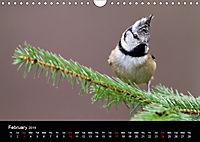 Scotland's Wildlife 2019 (Wall Calendar 2019 DIN A4 Landscape) - Produktdetailbild 2