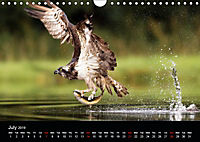 Scotland's Wildlife 2019 (Wall Calendar 2019 DIN A4 Landscape) - Produktdetailbild 7
