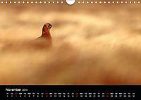 Scotland's Wildlife 2019 (Wall Calendar 2019 DIN A4 Landscape) - Produktdetailbild 11