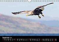Scotland's Wildlife 2019 (Wall Calendar 2019 DIN A4 Landscape) - Produktdetailbild 9