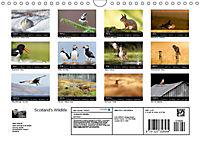 Scotland's Wildlife 2019 (Wall Calendar 2019 DIN A4 Landscape) - Produktdetailbild 13