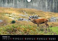 Scotland's Wildlife 2019 (Wall Calendar 2019 DIN A4 Landscape) - Produktdetailbild 10
