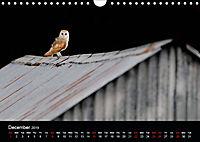 Scotland's Wildlife 2019 (Wall Calendar 2019 DIN A4 Landscape) - Produktdetailbild 12