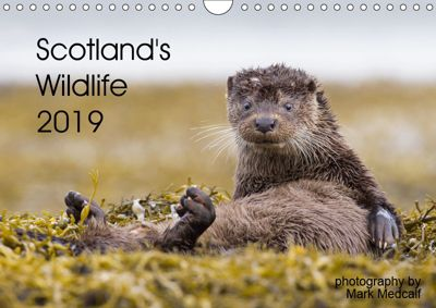 Scotland's Wildlife 2019 (Wall Calendar 2019 DIN A4 Landscape), Mark Medcalf