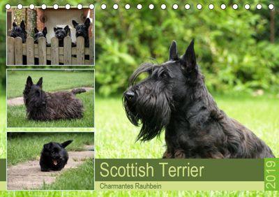 Scottish Terrier - Charmantes Rauhbein (Tischkalender 2019 DIN A5 quer), Birgit Bodsch
