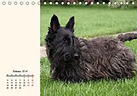 Scottish Terrier - Charmantes Rauhbein (Tischkalender 2019 DIN A5 quer) - Produktdetailbild 2