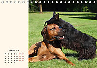 Scottish Terrier - Charmantes Rauhbein (Tischkalender 2019 DIN A5 quer) - Produktdetailbild 10