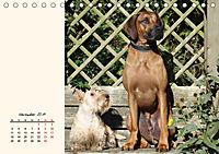 Scottish Terrier - Charmantes Rauhbein (Tischkalender 2019 DIN A5 quer) - Produktdetailbild 11