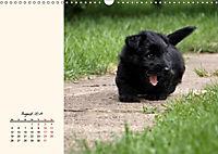 Scottish Terrier - Charmantes Rauhbein (Wandkalender 2019 DIN A3 quer) - Produktdetailbild 8